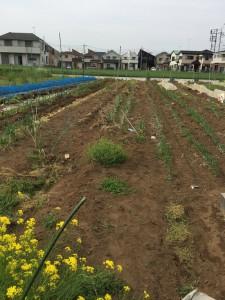 楽農くらぶ 野瀬自然農園