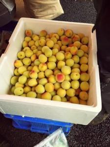 楽農くらぶ 野瀬自然農園の梅。おいしい梅干しにな〜れ!