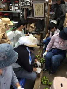 楽農くらぶ 直売所で柿渋作り