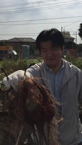 楽農くらぶ どうだ〜、と大きなサツマイモ!