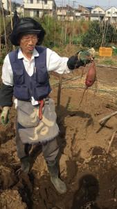 楽農くらぶ 野瀬さんにサツマイモ掘りのコツを教えていただく
