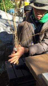 楽農くらぶ 野瀬さんによるしめ縄作りの実演