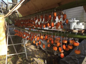 楽農くらぶ 自分で収穫して干した干し柿を初めて味わいました